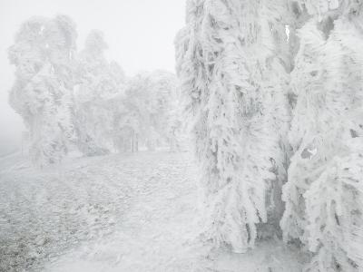 Iced Up Weeping Willows in the Wechsel Region, Lower Austria, Austria-Rainer Mirau-Photographic Print