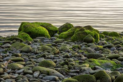Iceland, Gardskagi, Coast, Moss-Covered Stones-Catharina Lux-Photographic Print