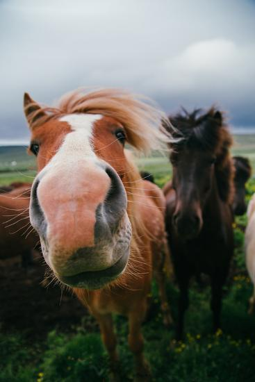 Iceland Horses and Clouds, Farm Scene, High Country Iceland-Vincent James-Photographic Print