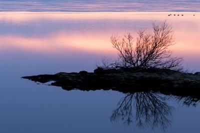 https://imgc.artprintimages.com/img/print/iceland-lake-myvatn-reykjahlio-sunset-reflected-in-a-tundra-pond_u-l-q1d64n50.jpg?p=0