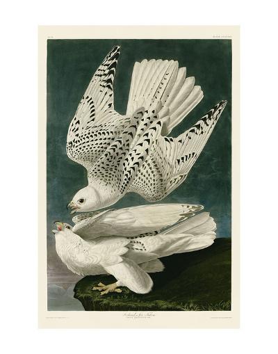 Iceland or Jer Falcon-John James Audubon-Art Print