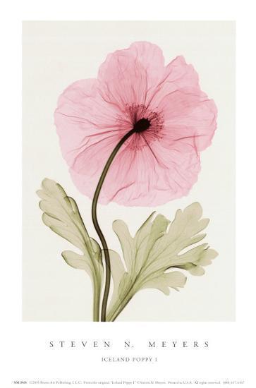 Iceland Poppy I-Steven N^ Meyers-Art Print