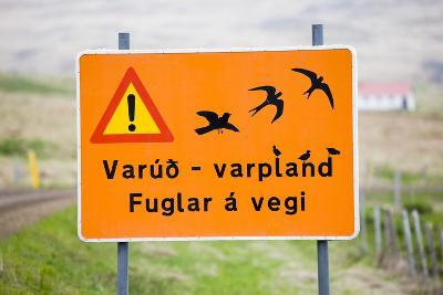Iceland, Road Sign, Warning 'Low-Flying Birds'-Frank Lukasseck-Photographic Print