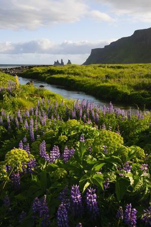 https://imgc.artprintimages.com/img/print/iceland-vik-i-myrdal-stream-running-through-field-of-wildflowers_u-l-prpvlj0.jpg?artPerspective=n
