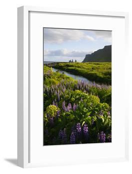 Iceland. Vik I Myrdal. Stream Running Through Field of Wildflowers-Inger Hogstrom-Framed Photographic Print