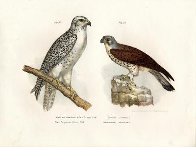Icelandic Gyrfalcon, 1864--Giclee Print