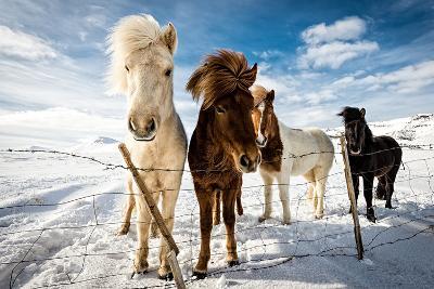 Icelandic Hair Style-Mike Leske-Photographic Print