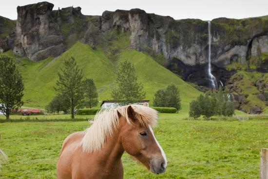 Icelandic Horse Near Waterfall-Paul Souders-Photographic Print