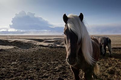 https://imgc.artprintimages.com/img/print/icelandic-horses-near-ash-plume-from-eyjafjallajokull-eruption_u-l-pznp0j0.jpg?p=0
