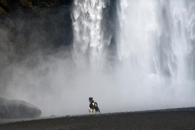 Icelandic Pony at Skogarfoss Waterfall-David Yarrow Photography-Photographic Print