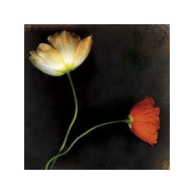 Icelantic Poppies-Rick Filler-Giclee Print