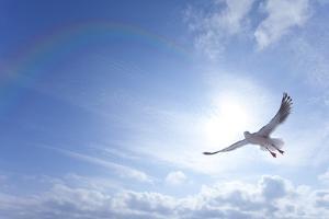 Seagull by ICHIRO