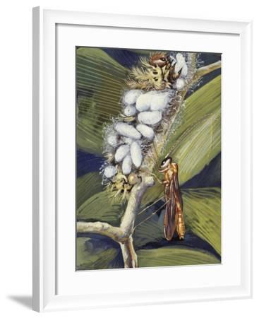Ichneumon Wasp (Ophion Macrurum), Vespidae--Framed Giclee Print