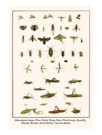 Ichneumon Wasps, Flies, Potter Wasp, Bees, Wood Wasp, Stonefly, Mayfly, Beetles, Jewel Beetle, etc.-Albertus Seba-Art Print