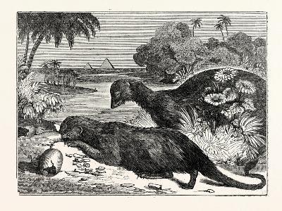 Ichneumons--Giclee Print