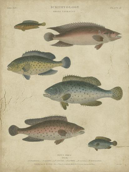 Ichthyology I-Abraham Rees-Art Print