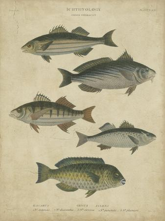 https://imgc.artprintimages.com/img/print/ichthyology-iii_u-l-f5bvu90.jpg?p=0