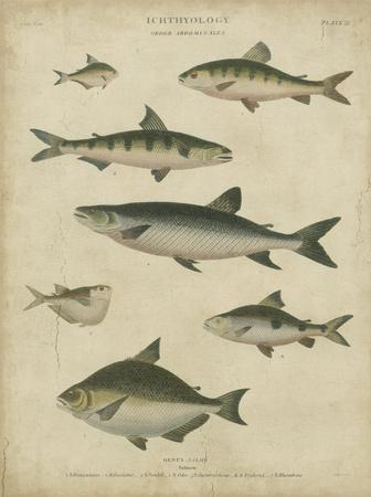 https://imgc.artprintimages.com/img/print/ichthyology-iv_u-l-f5bvu70.jpg?p=0