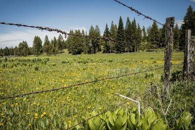 Idaho, Camas Prairie, Field and Barbed Wire Fence-Alison Jones-Photographic Print