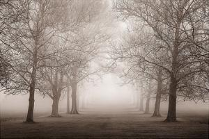 Layers of Trees II by Igor Svibilsky