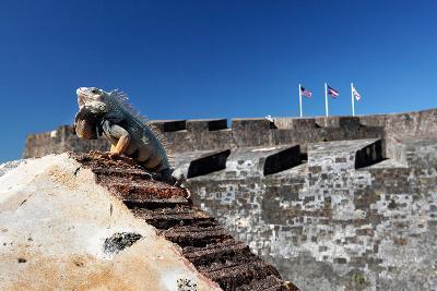 Iguana Basking, San Cristobal Fort, San Juan, PR-George Oze-Photographic Print