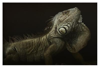 Iguana Profile-Aleksandar Milosavljevic-Giclee Print