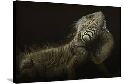 Iguana Profile-Aleksandar Milosavljevic-Stretched Canvas Print