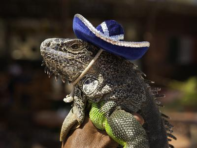 https://imgc.artprintimages.com/img/print/iguana-wearing-a-sombrero-in-cabo-san-lucas_u-l-pzo3mk0.jpg?p=0