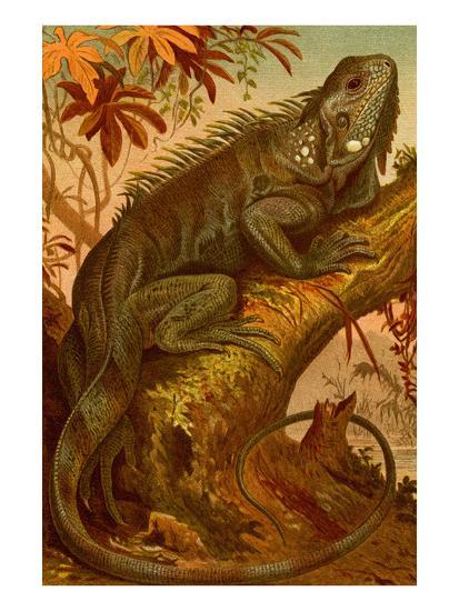 Iguana-F^W^ Kuhnert-Art Print