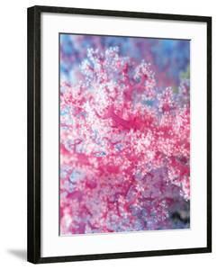 Gorgonian Coral by Ihoko Saito/ Toshiyuki Tajima