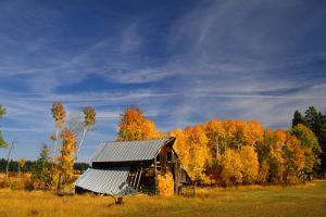 Old Barn by Ike Leahy