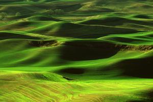 Palouse Green by Ike Leahy
