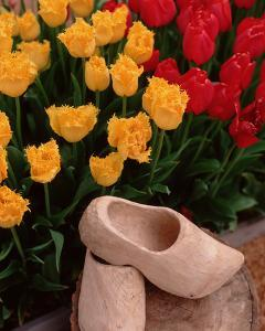 Wooden Shoe Tulips by Ike Leahy