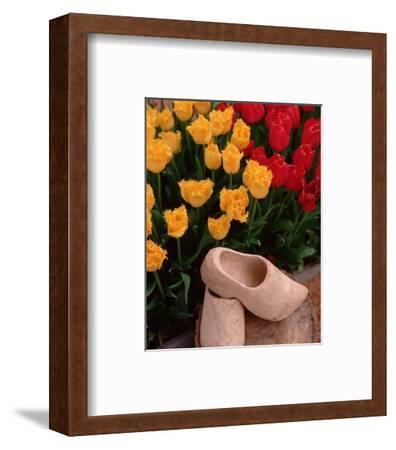 Wooden Shoe Tulips