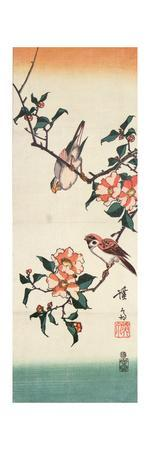 Sparrows and Camelia