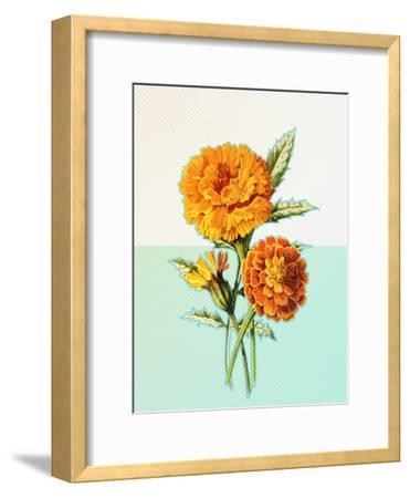 Marigold Yellow by Ikonolexi