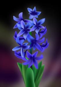 Hyacinth by Ikuko Kowada