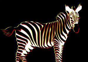 Zebra in Black Horizontal by Ikuko Kowada