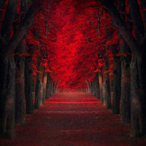 Endless Passion by Ildiko Neer