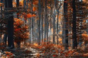 Painting Forest by Ildiko Neer