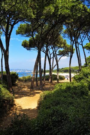 Ile Sainte Marguerite - Cannes - France-Philippe Hugonnard-Photographic Print