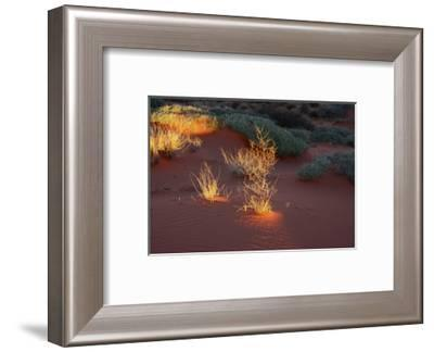 Illuminated grass, Valley of Fire State Park, Nevada, USA-Michel Hersen-Framed Photographic Print