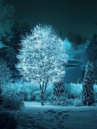 Illuminated Tree in Winter Garden-Hannuviitanen-Photographic Print