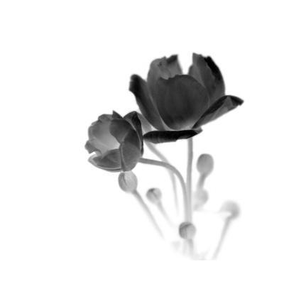 https://imgc.artprintimages.com/img/print/illumine-2_u-l-pzj1sh0.jpg?p=0