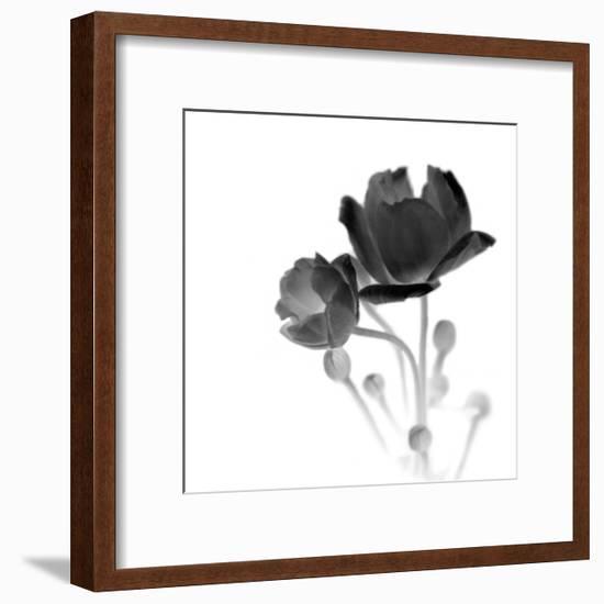 Illumine 2-Heather Johnston-Framed Art Print