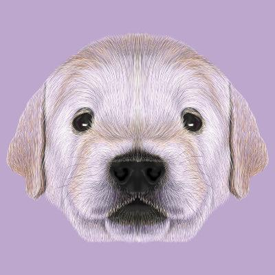 Illustrated Portrait Of Golden Retriever Puppy Art Print By