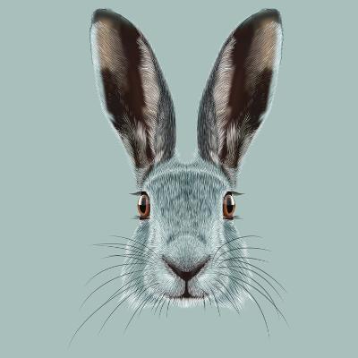 Illustrated Portrait of Hare.-ant_art19-Art Print