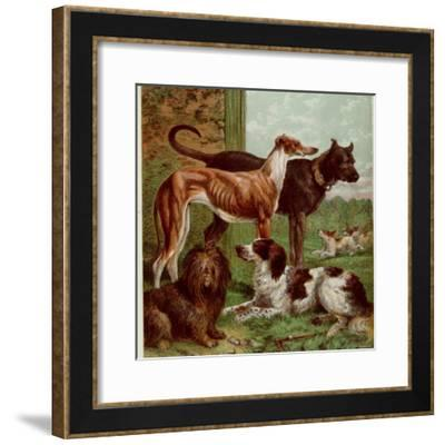 Illustration by Kronheim of Various Dogs, from Aunt Louisa's Birthday Gift--Framed Photographic Print