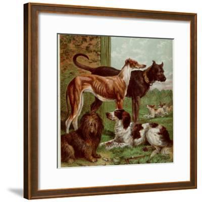 Illustration by Kronheim of Various Dogs, from Aunt Louisa's Birthday Gift
