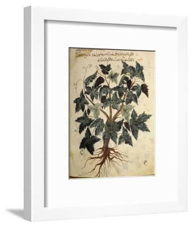 Illustration from an Arabic version of Dioscorides' Materia Medica, Mosul Iraq, 1228-Werner Forman-Framed Photographic Print